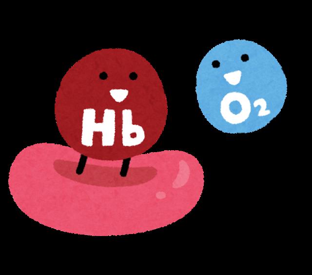 B12と赤血球