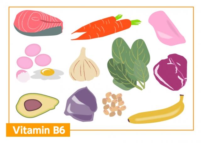 ビタミンB6=たんぱく質代謝